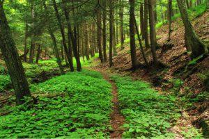 neuroplasticity faint path